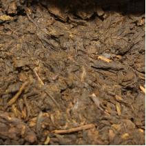 Шу пуэр (2012 год) | 1 грамм